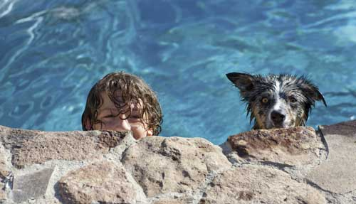 Boy and dog in pool